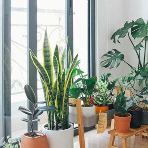 Plants By Type