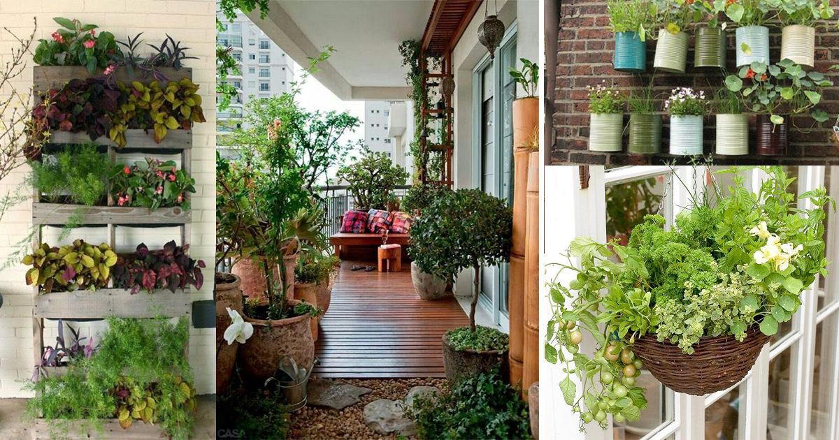Terrace Gardening 01