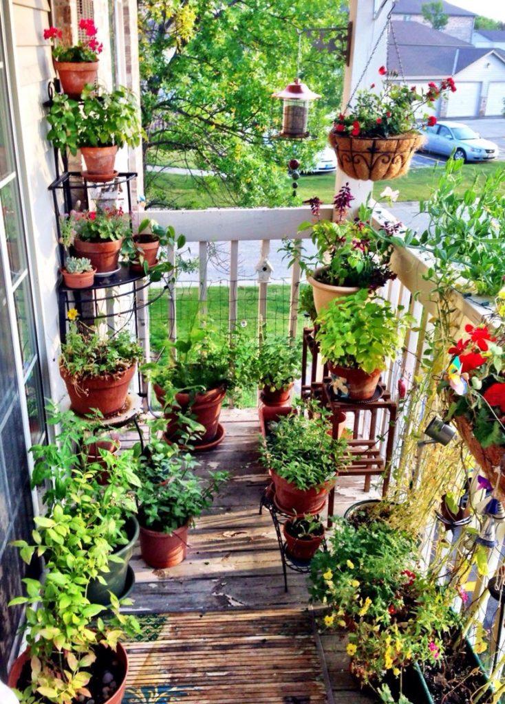 Terrace Gardening 02